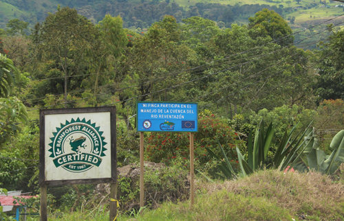 Rainforest Alliance certified coffee farm in Costa Rica. Credit: Bioversity International/C.Zanzanaini