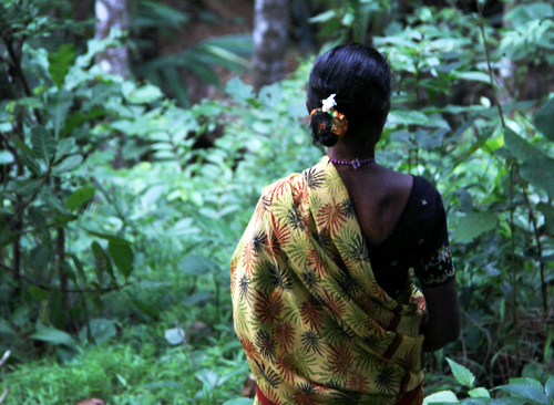 Women who collects fruits from the forests of the Western Ghats. Credit:Bioversity International/E.Hermanowicz