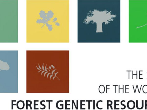 Snapshot of the cover of the State of the World's Forest Genetic Resources report