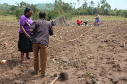 Joy demonstrating best method for bean planting. Credit: Bioversity International/J.Turyatemba