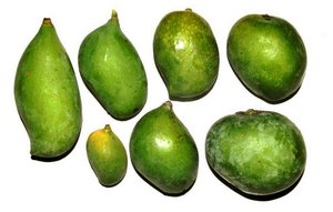 A selection of Indian mango varieties