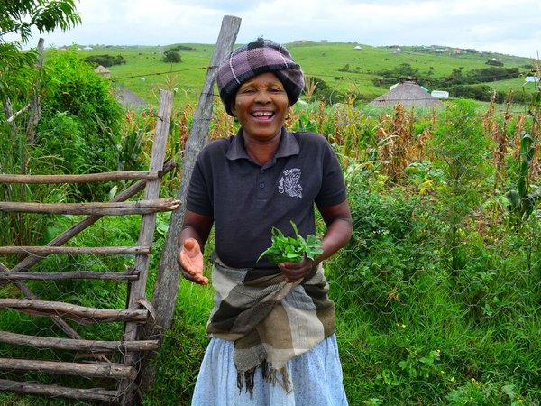 Mama Mamrhasi from Hobeni Village, South Africa, displays wild spinach (known as 'imifino' in Xhosa, one of the official languages of South Africa) that she has collected from her home garden. Credit: Katie Tavenner