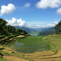 Rice landscape in Nepal. Credit: Bioversity International/J.Zucker