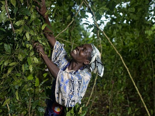 Women are vital tenants of both livelihoods and landscapes. Photo credit: CIFOR
