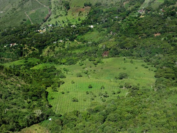 Different stages of restoration of seasonally dry tropical forest in Colombia. credit: Luis Gonzalo Moscoso Higuita