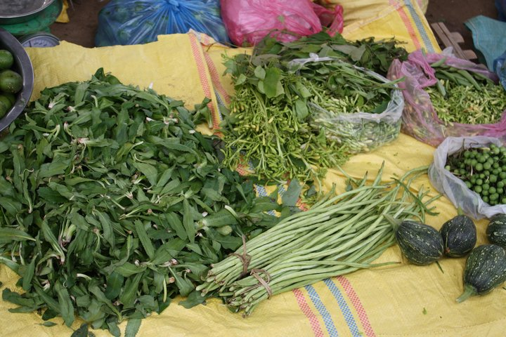 Dark Green Leafy Vegetables are a rich source of vitamin A, Vietnam. Credit: Bioversity International/J. Raneri