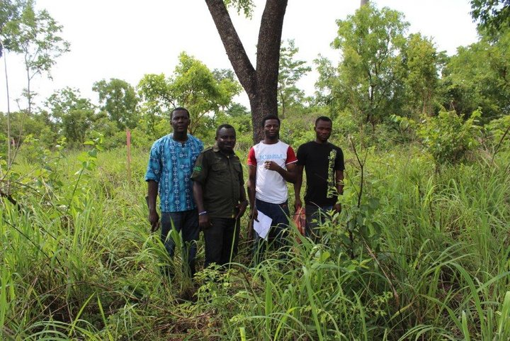 Pterocarpus erinaceus germplasm sampling mission with other members of the team. From left to right: William Kwame Nuako Bandoh (in blue shirt), an official of Forestry Commission, a technician, a local person with extensive knowledge on species. Credit: William Kwame Nuako Bandoh.