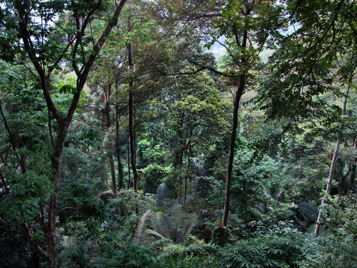 Malaysian dipterocarp forest. Credit: Bioversity International/R.Jalonen