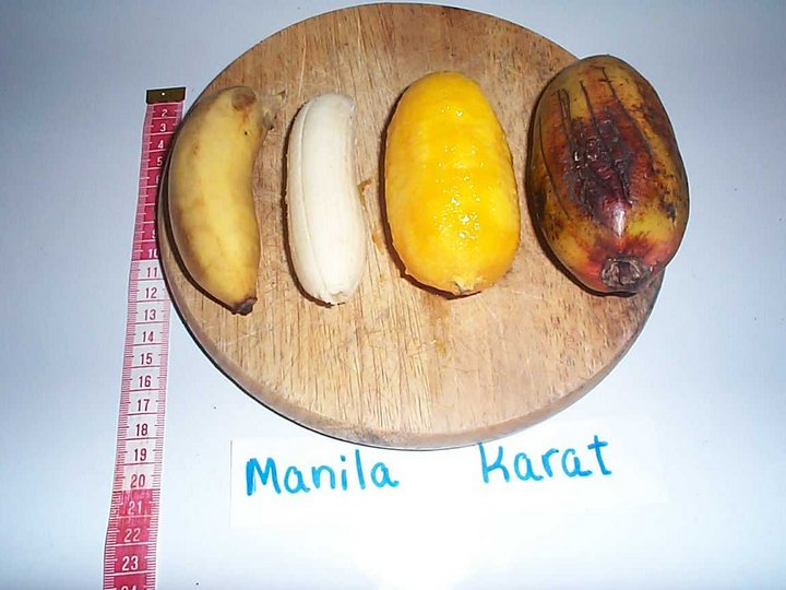 Orange-fleshed Fe'i bananas from the Pacific are rich in vitamin A precursors and an important source of good nutrition. The picture compares Karat Pwehu, one type of Fe'i banana, with while fleshed Utin Menihle, peeled and unpeeled.  Please credit: Bioversity International/L. Englberger