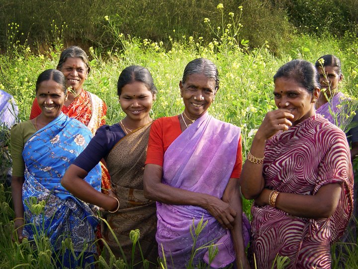 Members of a Indian women's group in a field of finger millet. Credit: Bioversity International/S.Padulosi
