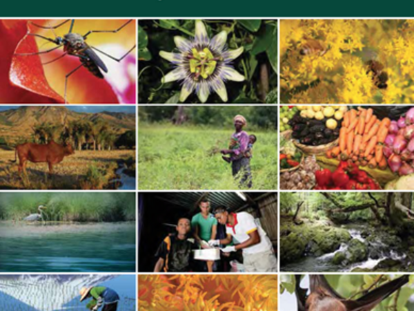 Cover of Connecting Global Priorities: Biodiversity and Human Health, a State of Knowledge Review. Credit: CBD/WHO