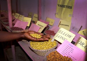 Bean varieties in a community seedbank in Kiziba, Uganda. Credit: Bioversity International/A.Sidhu