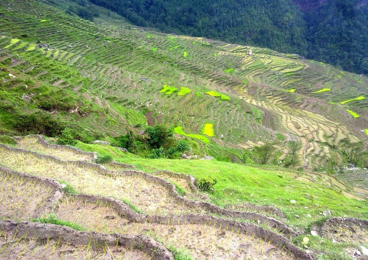Agricultural landscape, Terai, Nepal - one of the areas affected by the 2015 earthquakes. Credit: LI-BIRD/Pudasaini