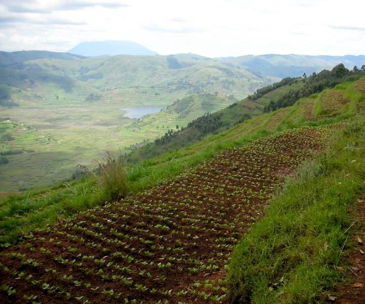 Terraced farming with grass strips to reduce soil erosion, Uganda. Credit: Bioversity International/D. Jarvis