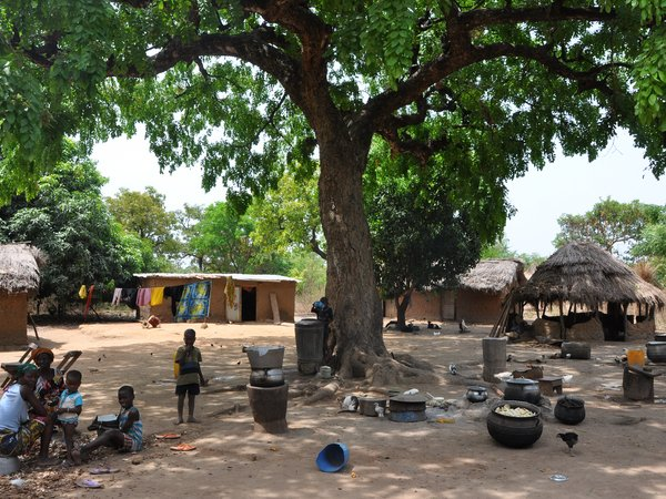 African mahogany (Khaya senegalensis) at the centre of a village in Benin. Credit: Bioversity International/B.Vinceti