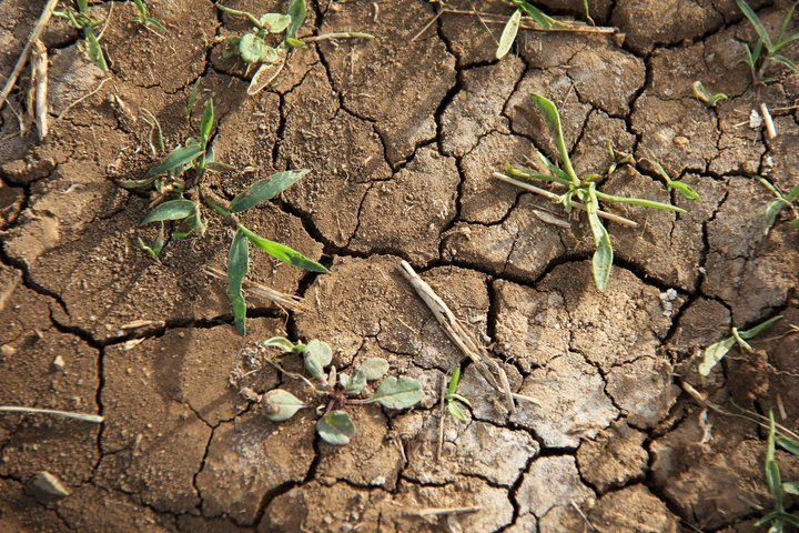 Dry, cracked earth, Ethiopia. Credit: Bioversity International/C. Zanzanaini