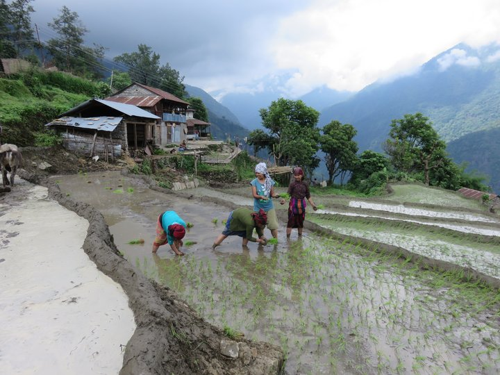 Three months after two devastating earthquakes hit Nepal, innovative crowdsourcing technology and diversity kits are helping to match seeds to needs as part of the disaster recovery plan.