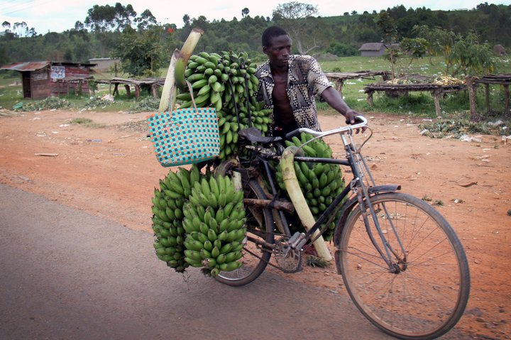 Transporting bananas in Uganda. Credit: Bioversity International/N.Capozio