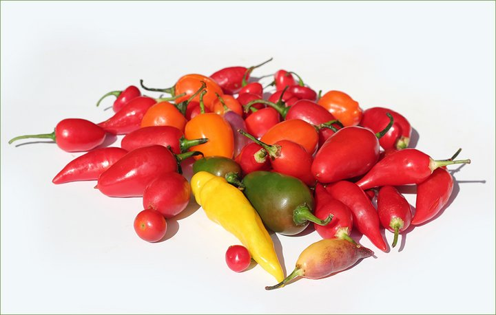 Chili diversity. Credit: Bioversity International/C. Zanzanaini