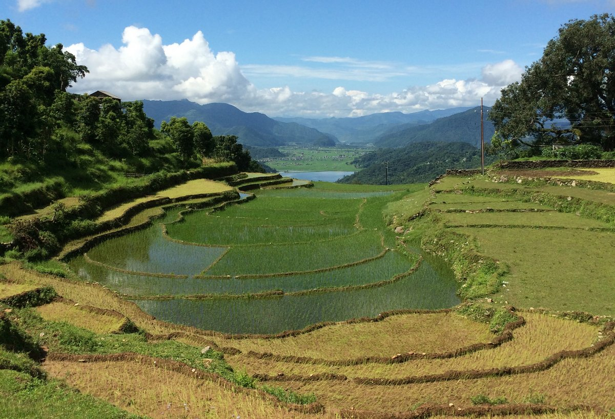 Rice terraces, Nepal. Credit: Bioversity International/J.Zucker