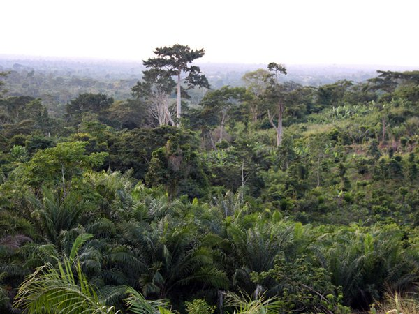A forest in Ghana. Credit: Bioversity International/C.Zanzanaini
