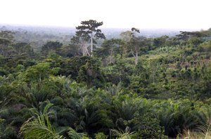 Forest landscape in Ghana. Credit: Bioversity International/C.Zanzanaini