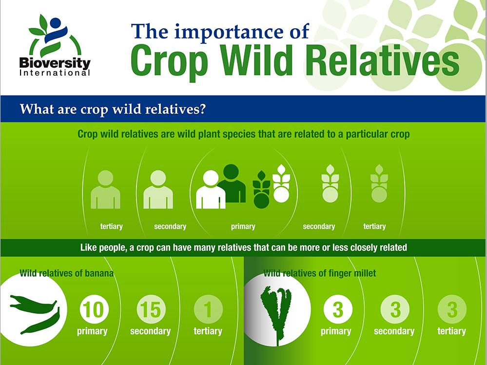 Infographic: The importance of crop wild relatives. Credit: Bioversity International