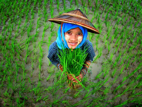 A young girl in a rice paddy, Pyay, Myanmar. Credit: Khant Zaw
