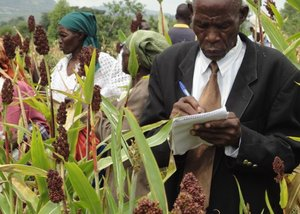 Evaluating sorghum varieties, Zambia. Credit: Bioversity International/G. Otieno