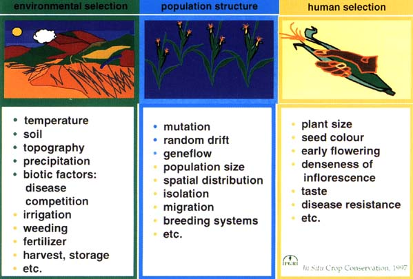 factors in genetic diversity A major factor in whether these reproductive technologies will increase or decrease genetic diversity is what model they are implemented under, free market or state control each model addresses the concerns and motivations of those affected differently.