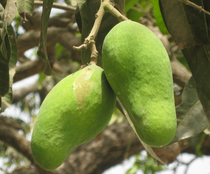 Fruit tree and tree crop diversity for nutrition, livelihoods