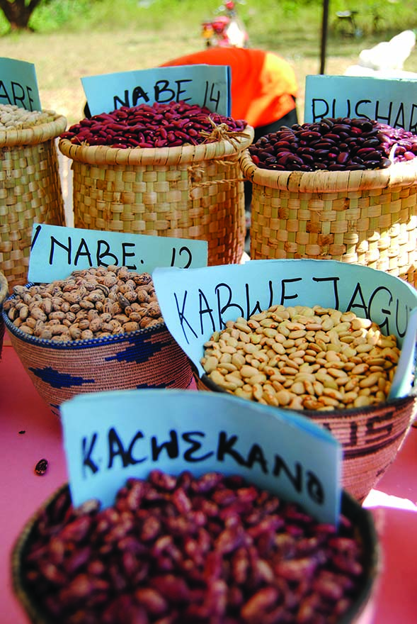 Bean varieties at seed fair in Uganda. Credit: Bioversity International/I.Lopez-Noriega