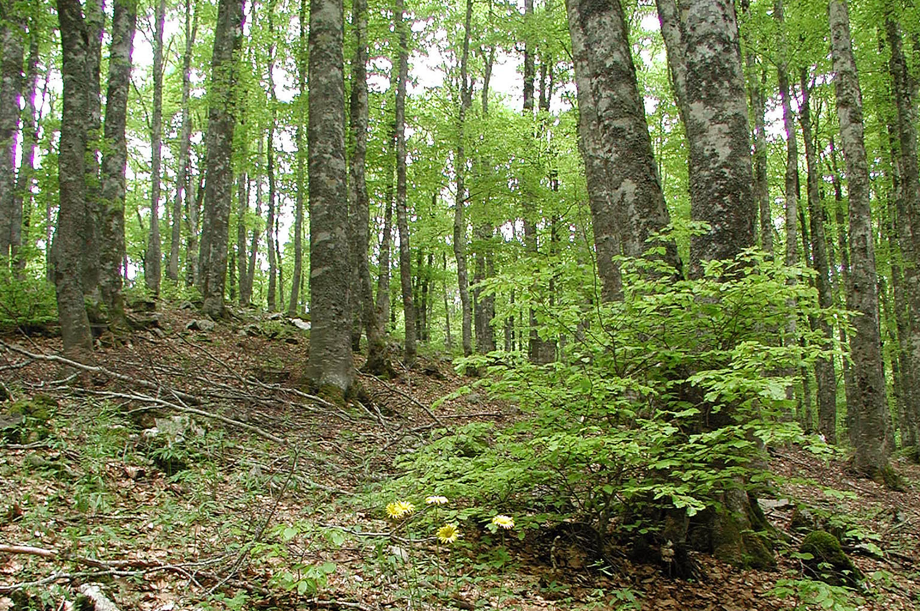 conservation of trees Conservation can mean both protection against unwarranted cutting down as well as planting new ones in compensation with utmost concern because trees are.