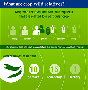 Detail of the Crop Wild Relatives infographic by Bioversity International