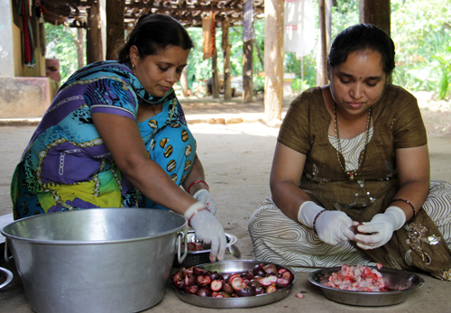 Preparing kokum juice, India. Credit: Bioversity International/E.Hermanowicz