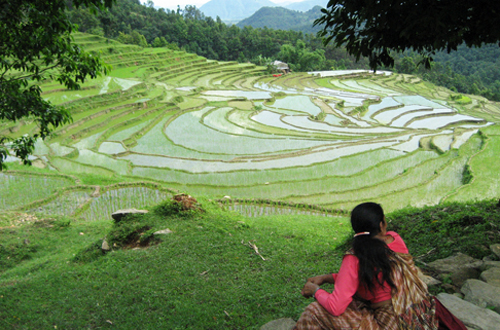 Rice terraces in Nepal. Credit: IRRI/B.Bouman