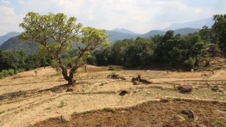 Dry terrace in Sri Lanka. Credit: Bioversity International/S. Landersz