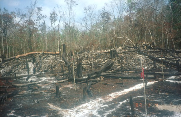 Slash and burn technique used to clear a tropical forest in Quintana Roo, Mexico. Credit: Bioversity International/L. Snook
