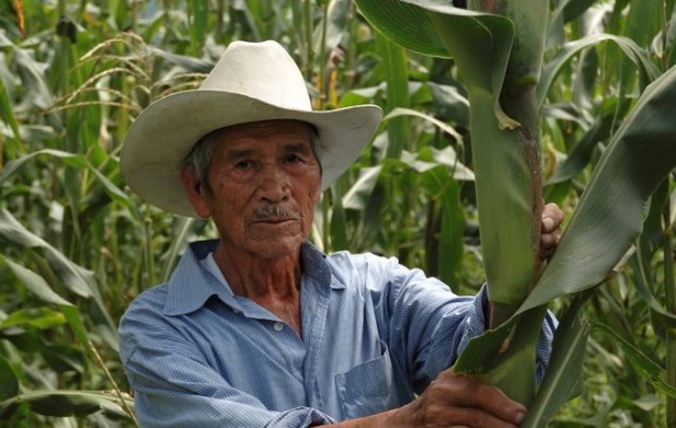 Maize farmer in Central America. Credit: CIMMYT/E. Phipps