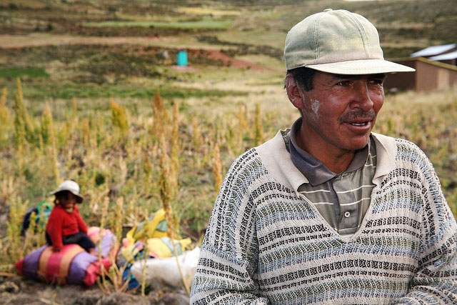 Peruvian farmer taking a break from harvesting quinoa. Credit: Bioversity International/A.Camacho