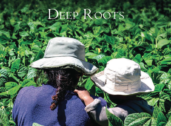 Deep Roots publication cover - International Year of Family Farming