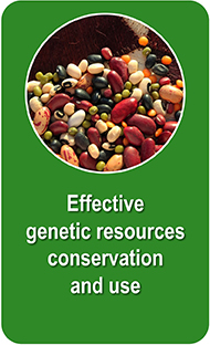 Assorted beans and pulses. Credit: Bioversity International/C. Zanzanaini